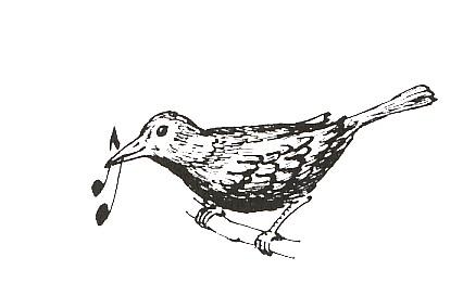 logo Merle Moqueur